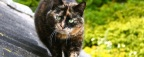 South-East 'cat killer' strikes in New Malden